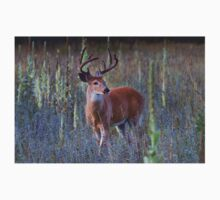 Early Morning White tailed Buck T-Shirt