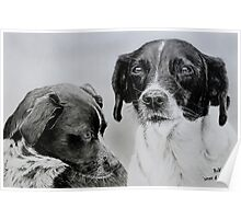 """""""Spike and Stip"""" - Dog portraits Poster"""