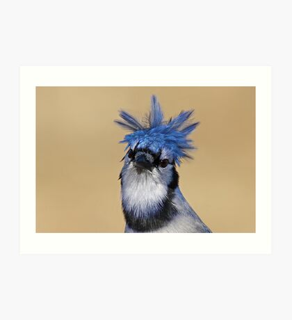Is that you Don King? - Blue Jay Art Print