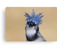 Is that you Don King? - Blue Jay Metal Print