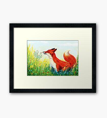 Zorro rojo  Framed Print