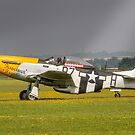 Mustang, Buttercups, Sunshine and Shower by Colin Smedley