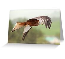 Red Kite in flight Greeting Card