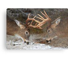 Clash of the Titans - White-tailed deer Bucks Metal Print