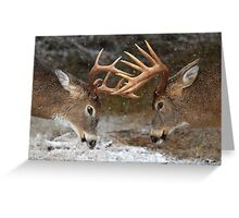 Clash of the Titans - White-tailed Bucks Greeting Card
