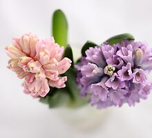 The Sweet Scent of Hyacinths  - JUSTART ©  by JUSTART