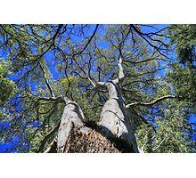 Tree Crown Photographic Print