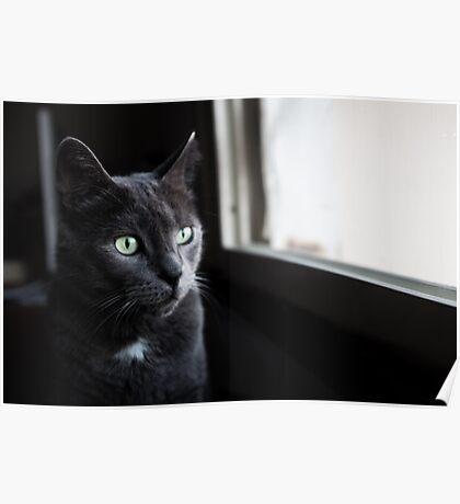 Grey Cat Portrait Poster