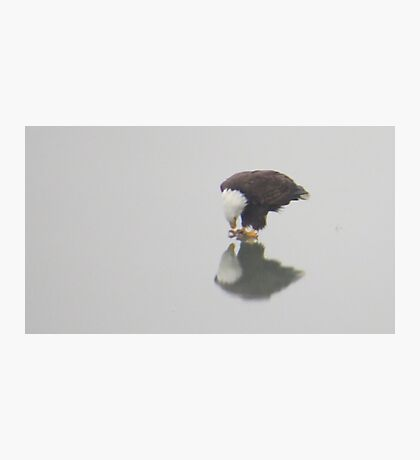 Eagle Reflection Photographic Print