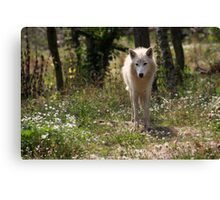 Hudson Bay Wolf Canvas Print