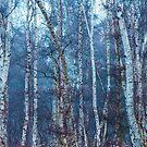 Dense Birch by stereocolours