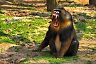 A Boring Day - Mandrill by Jo Nijenhuis