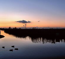 Good Night Duckies by Jo Nijenhuis