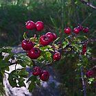 Berries by Kat Simmons