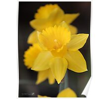 Daffodil named Exception Poster