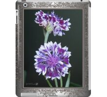 Bachelor Button from the Frosted Queen Mix iPad Case/Skin