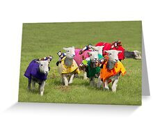 Racing sheep Greeting Card