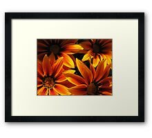 Gazania named Kiss Orange Flame Framed Print