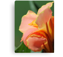 Dwarf Canna Lily named Corsica Canvas Print