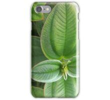 Velvety Greens 2 iPhone Case/Skin