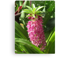 Eucomis named Leia Canvas Print