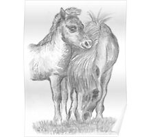 Shetland pony and foal Poster