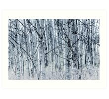 Still - Trembling Aspen Forest in April Art Print
