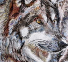Gray Wolf Watches and Waits Sticker