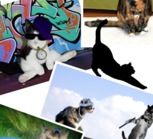 Collage of  Cat Photographs  Sticker