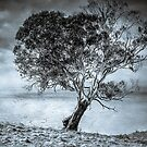 Tree in the Dead Zone by Clare Colins