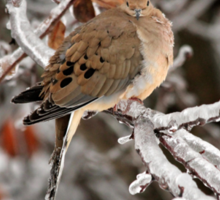 Mourning Dove in the Ice Storm Sticker