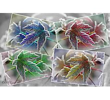 Frosted Maple Leaves in Pop Art Colours Photographic Print
