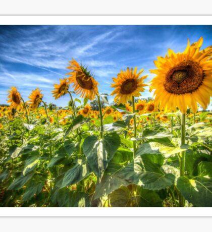 Sunflower Power! Sticker