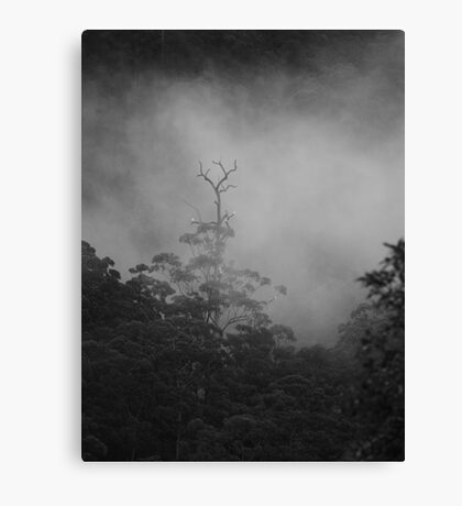 Morning Mist and Cockatoos Canvas Print