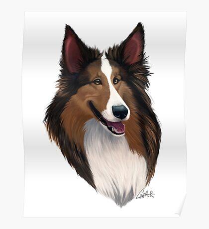 Shetland (Sheltie) Sheepdog Caricature Poster