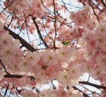 tree blossom Sticker