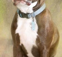 Portrait of a Gentleman Sticker