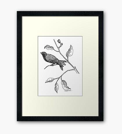 Hallway Bird Framed Print