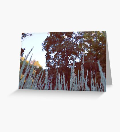 Sam Tamb photo Greeting Card