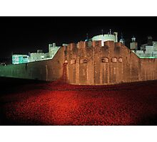 Poppies at the Tower of London - At Night #2 Photographic Print