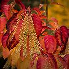 Seasons by Sue Morgan