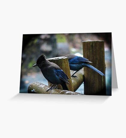 Stellar Jays on a drizzly afternoon Greeting Card