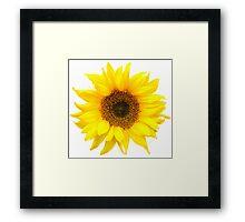 Sunflower burst. Framed Print