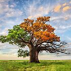Tree of Life by Mieke Boynton