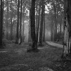 Kirth Kiln Regional Park 2  by Christine  Wilson Photography