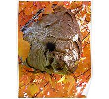 Paper nest close up Poster