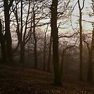 Foggy Sunset by KMorral