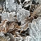 Frosted leaves - fluid edge by KMorral
