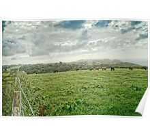 Cows in cloudy field Poster
