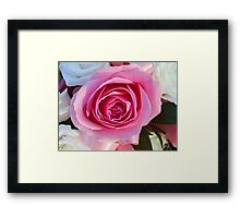 Pink Rose and Ribbon Framed Print
